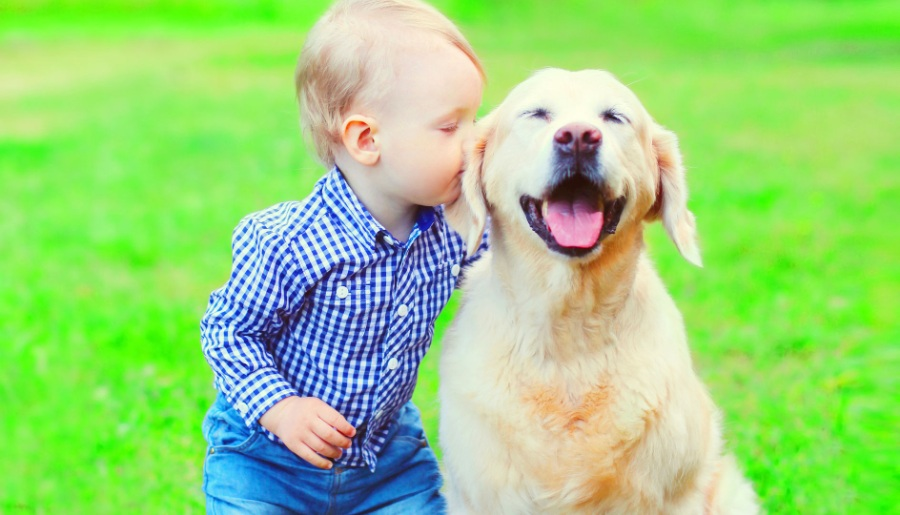 Are Labradors Good With Children